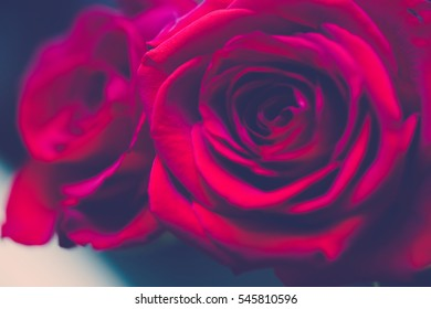 Close up image of bright red rose with vintage tone.