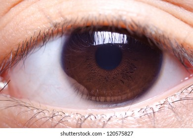 close up image of brown color human eye