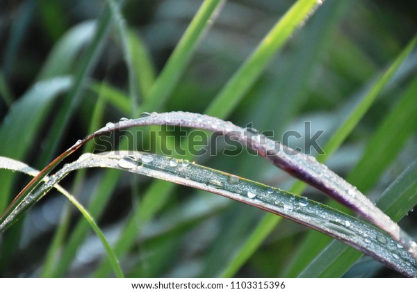 Close up image of dew drop in morning