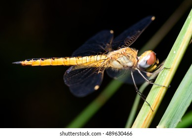 Close up image of dragonfly in the garden.