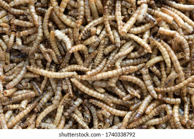 Close up image of dried mealworms