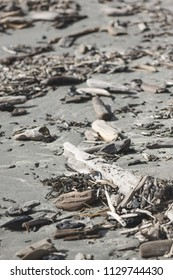 Close up image of driftwood on a sandy beach on the Kapiti Coast of New Zealand.