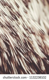Close up image of Emu Feathers