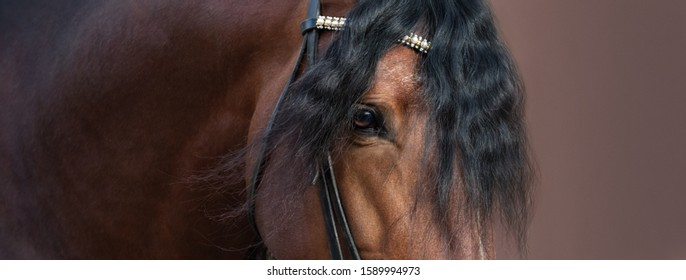 Close up image of eye, head and neck of bay Andalusian horse.
