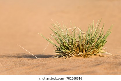 Close up image focused on an isolated desert vegetation over desert sand with blurred foreground and background