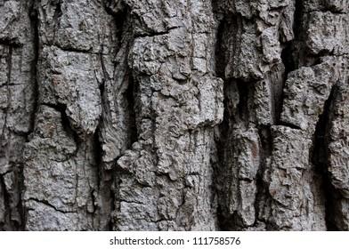 Close up image of gnarled bark texture