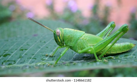 Close up image of green grasshopper in the nature - blurry and selective focus