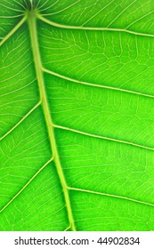 Close up image of green leaf showing detail surface texture