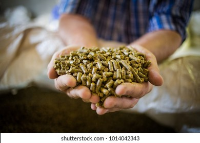 Close up image of hands holding animal feed at a stock yard