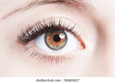 Close up image of human brown eye