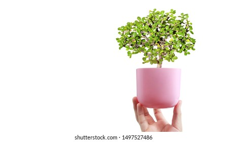 Close up image of human hands holding plant sprout,tree