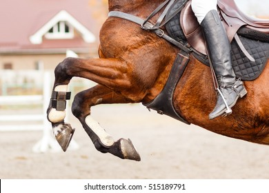 Close up image of jumping horse over hurdle bar on show jumping competition.