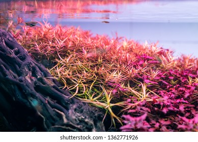 close up image of landscape nature style aquarium tank with a variety of red stem aquatic plants inside.