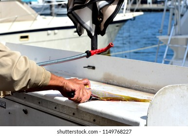Close up image of a man cleaning a Yellowtail Snapper fish with a fillet knife.