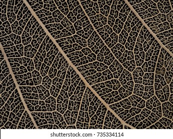 Close up image of Old and ruined dried Bodhi leaf on black background. Fetish of Buddhist