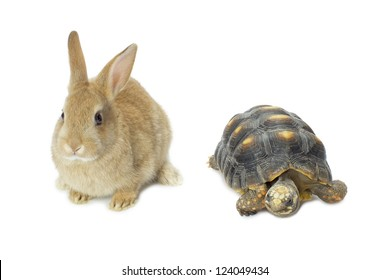 Close up image of rabbit and turtle against white background