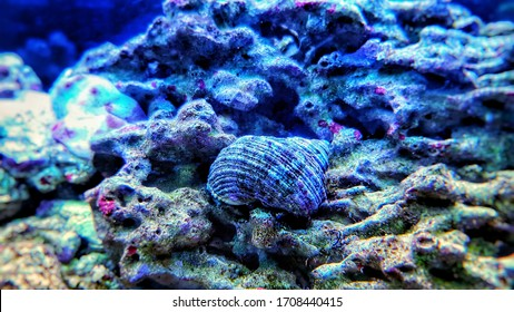 Close up image of saltwater snail invertebrate sea creature