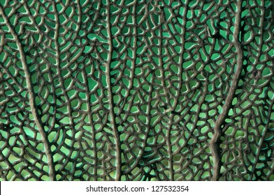 Close up image of sea fan for nature background