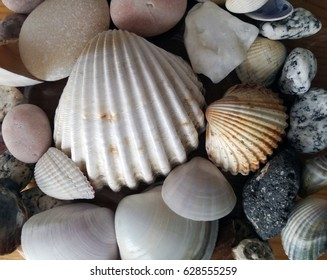Close up image of sea shells and pebbles, decorative scallops and mussels with scalloped edges.