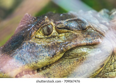 close up image of small crocodile's eye in cage on day time.