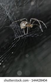 close up image of spider in spiderweb