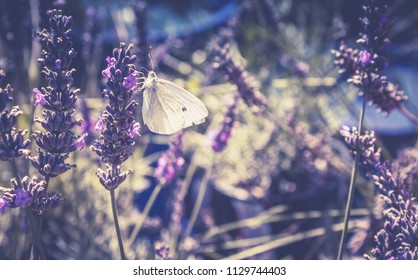 Close up image of a White butterfly in a lavender patch with copy space.