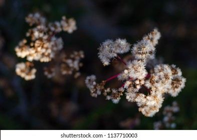 A close up images of the seeds on the edge of a branch, in winter, about to scatter at the change of season, with the background fairly dark.