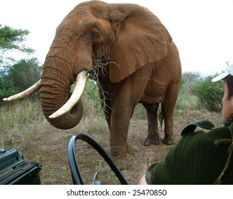 Close interaction between a male elephant and a game ranger