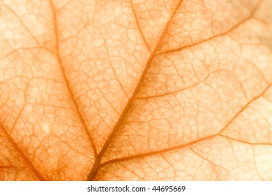 Close up of intricate vein patterns on dried leaf