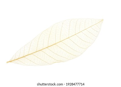 Close up of isolated Dry white leaf