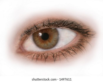 Close up of an isolated woman's brown or hazel eye. Macro close-up.