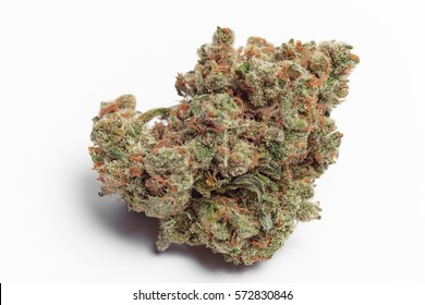 Close up of Jack Herrer Marijuana Bud