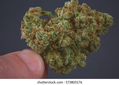 Close up of Jack Herrer medical marijuana bud being held