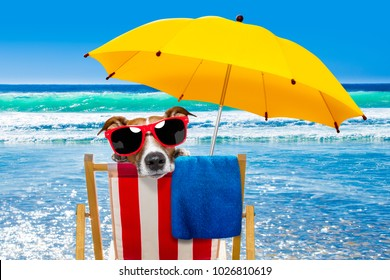close up of  jack russell dog resting and relaxing on a hammock or beach chair under umbrella at the beach ocean shore, on summer vacation holidays,