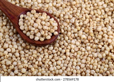 close up of Jowar (Sorghum) with wooden spoon.