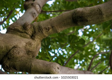 Close up jungle tree trunk warped twisted forest tropical bark nature