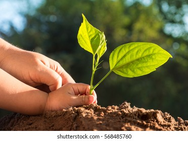 Close up Kid and father hands planting young tree over green background