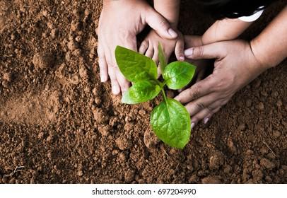 Nahaufnahme Kid-Hand und Vater, der junge Pflanze auf schwarzen Boden anpflanzt, Draufsicht auf den Boden und Grunge-Stil