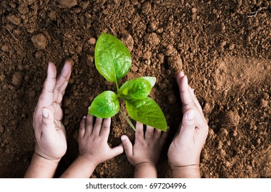 Close up Kid hand and father planting young plant to black soil top view and grunge style