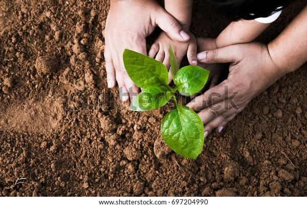Cerrar la mano de los niños y el padre plantando la planta joven a la vista de la parte superior del suelo negro y al estilo grunge