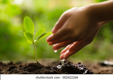 Close up Kid hand planting and watering young tree over green background