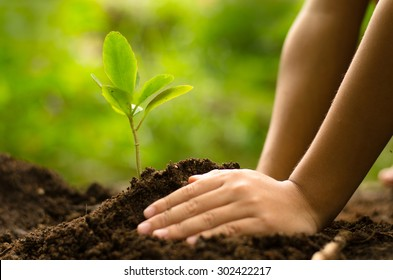 Close up Kid hand planting young tree over green background