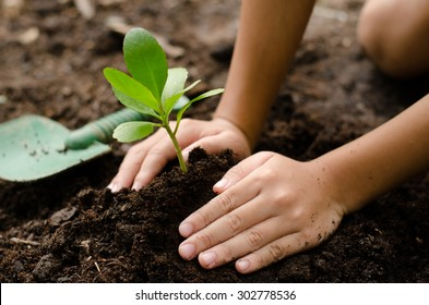 Close up Kid hand planting young tree on black soil