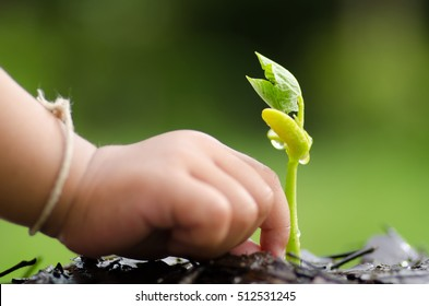 Close up kid hand seedling over natural green background
