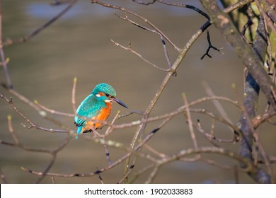 Close up of Kingfisher perched on branch against blurred background