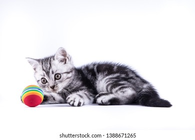 Close up kitten playing with a small ball