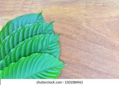 close up of kratom leaf (Mitragyna speciosa) Mitragynine on wood background. Drugs and Narcotics.Kratom is Thai herbal which encourage health