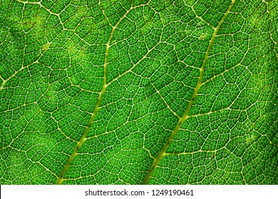 Close up of large green leaf texture