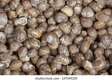 Close up of Large Group of Snails