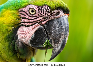 Close up of a large macaw bird during the day.